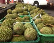 Makan durian musang king pun kena tipu