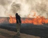 Israel dilanda bencana kebakaran, kini merayu bantuan untuk padamkan api