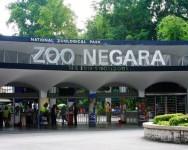 """Zoo Negara lengang. """"Bayar tiket mahal tapi binatang kurus kering, kurang promosi"""""""