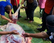Islam mengajar kaedah sembelihan korban serta yang berkaitan dengannya